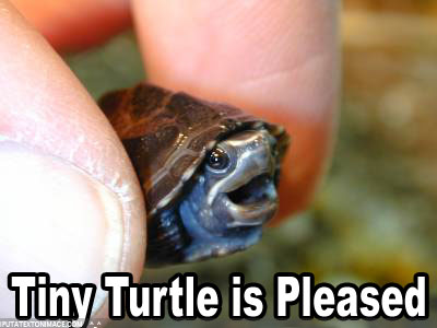 tiny-turtle